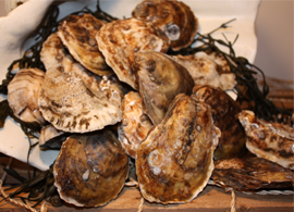 Mar Seafood Pine Island Oysters